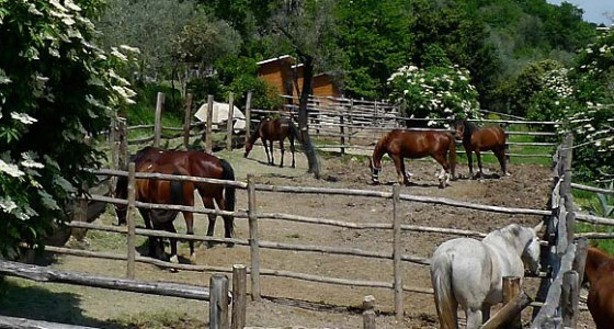 horse riding lessons lake garda italy - rareitaly
