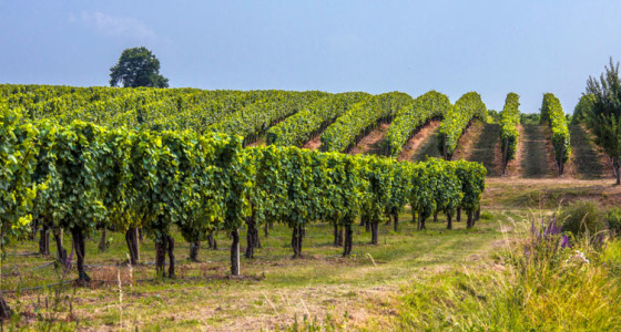 wine cellars and vineyards tour in italy - rareitaly