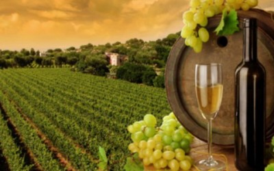 wine tour in lombardy and tuscany italy - rareitaly